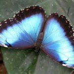 Butterfly House, Ceredigion