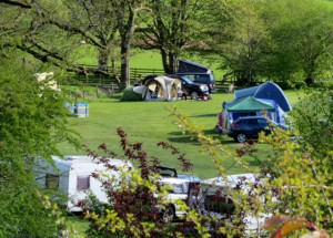 camping field spring (640x459)